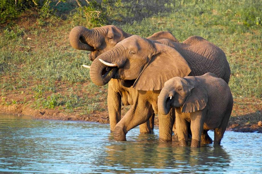Elephants-Thanda-Kwa-Zulu-Natal-lowres-lowlow[1].jpg