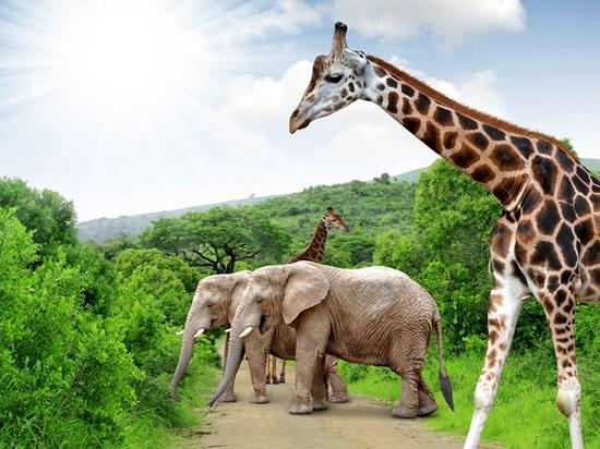 (Image)-image-afrique-du-sud-park-kruger-2015-04[1].jpg