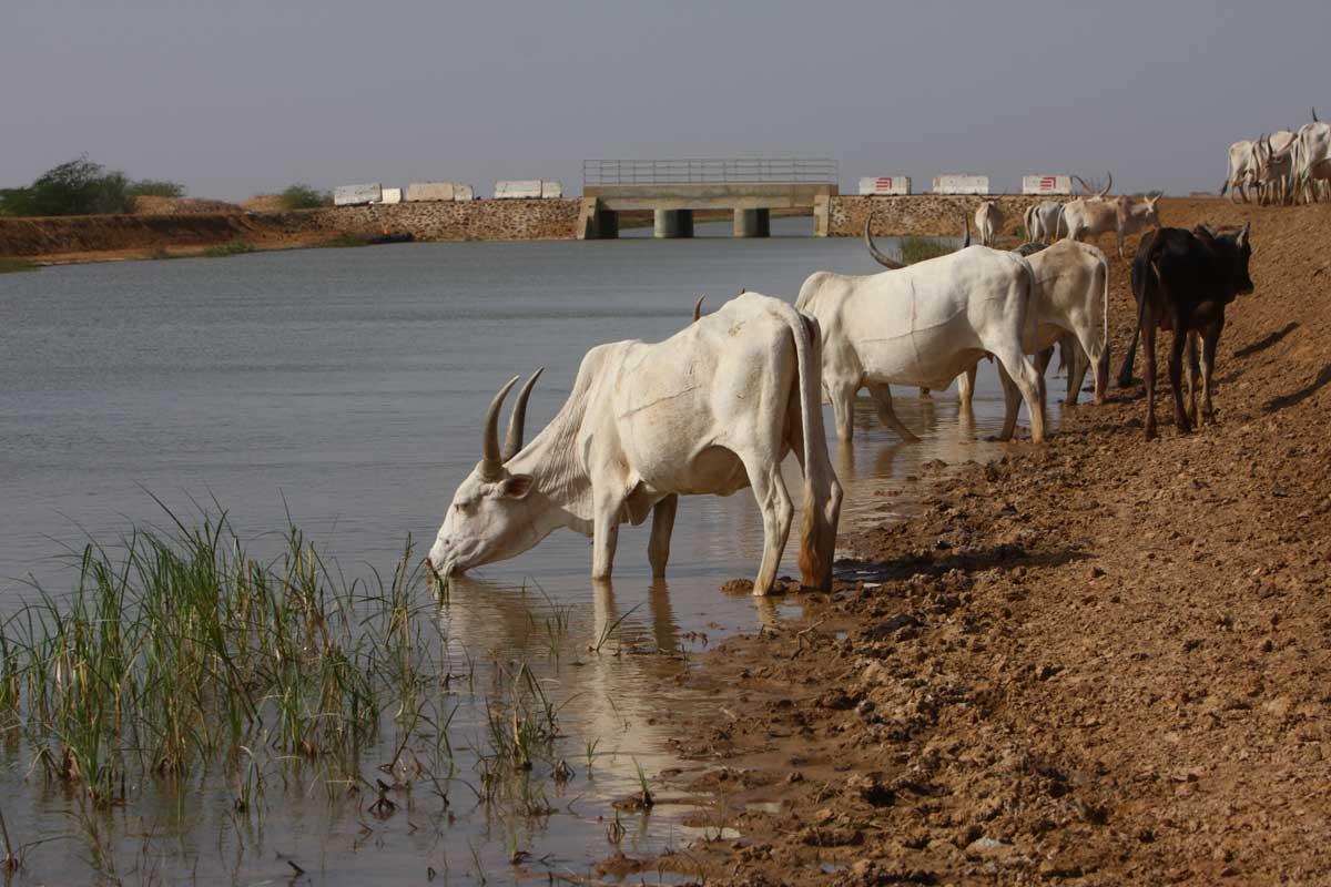 travaux_damenagement_hydro_agricole_du_canal_krankaye-senegal_pgire.jpg