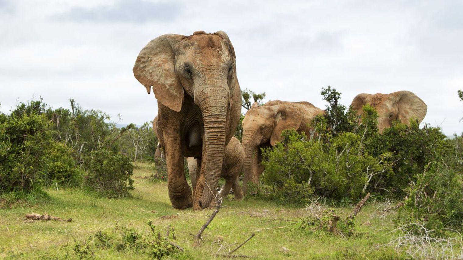 voyage-tourisme-afrique-du-sud_5169187[1].jpg