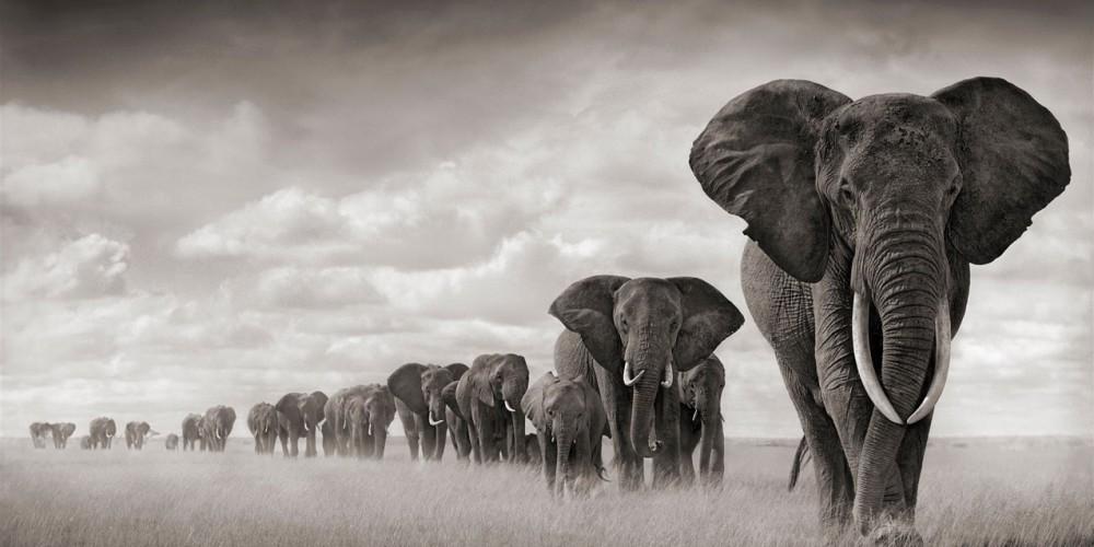 Elephants-8-1000x500.jpg