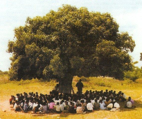 arbre-a-palabres-2-cecab-909b8.jpg