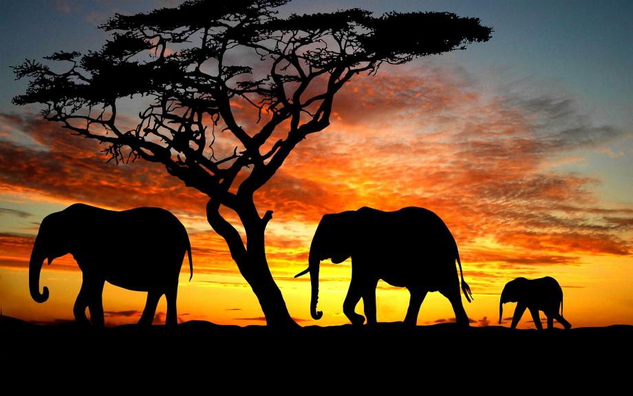 elephants008.jpg