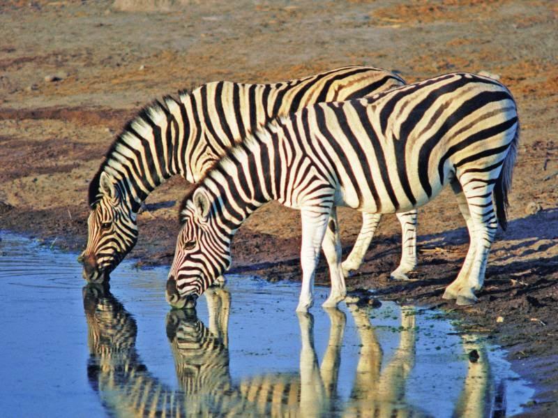 ZebrasAndZanzibarItinerary1ClassicSafarisAfrica-62241246981580_800_600.jpg