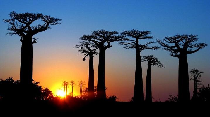 allee-de-baobabs-madagascar-photos-717x402.jpg