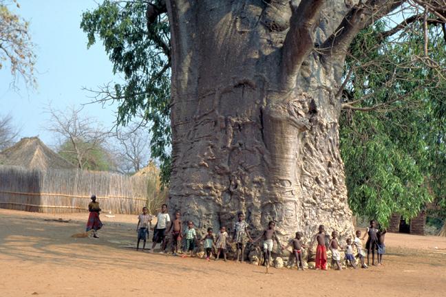 Baobab-children-1.jpg