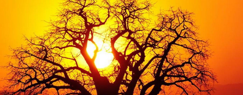 baobab-1440x564_c.jpg