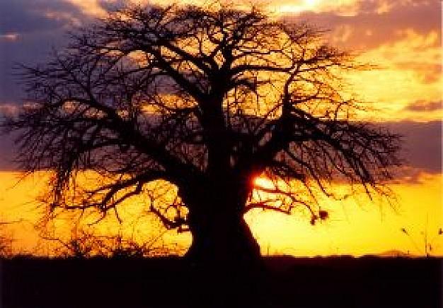 1-coucher-de-soleil-afrique_2758833.jpg
