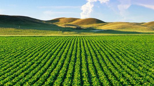 agriculture_2.jpg