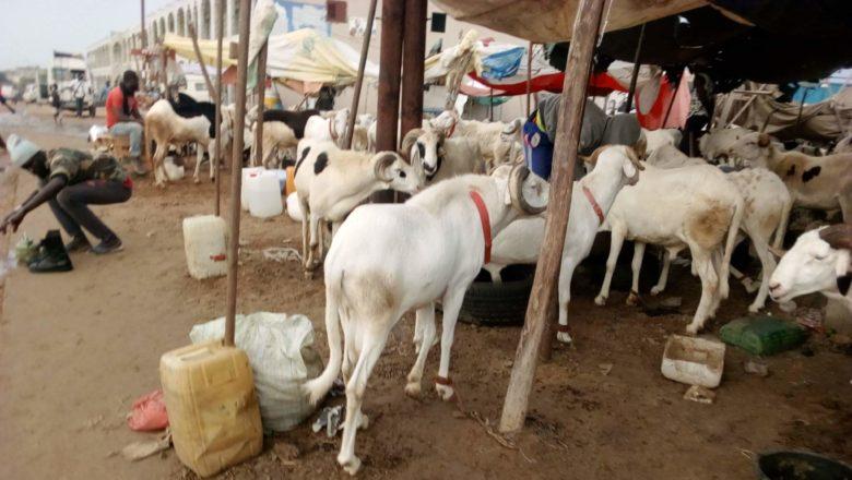 mouton-780x440.jpeg