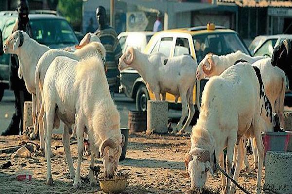 moutons-Tabaski.jpg
