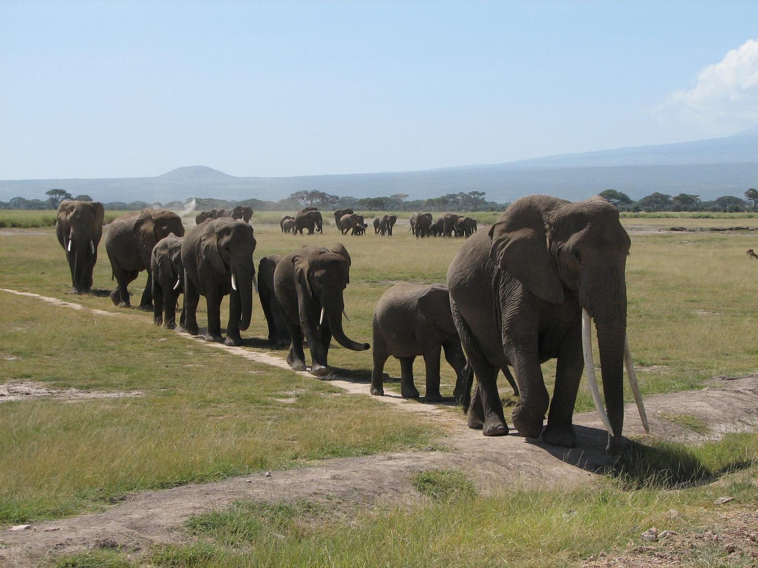 elephant-troupeau-0.jpg