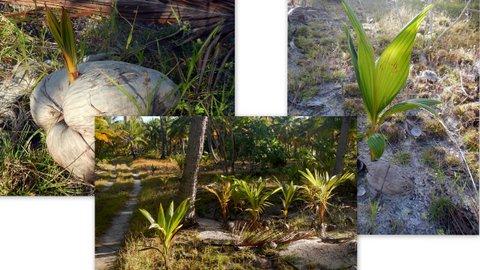 14 germination.jpg