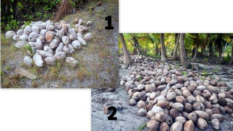 15 cocos.jpg