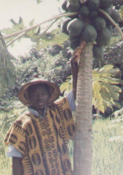 Dans un champ de papayers à Toussiana