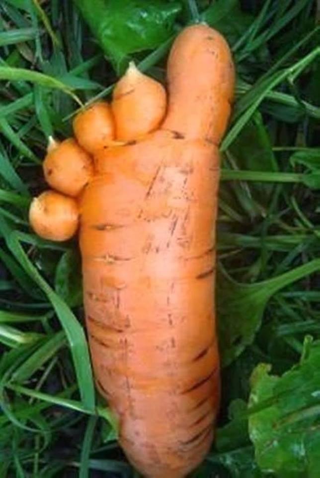 carotte spéc.jpg