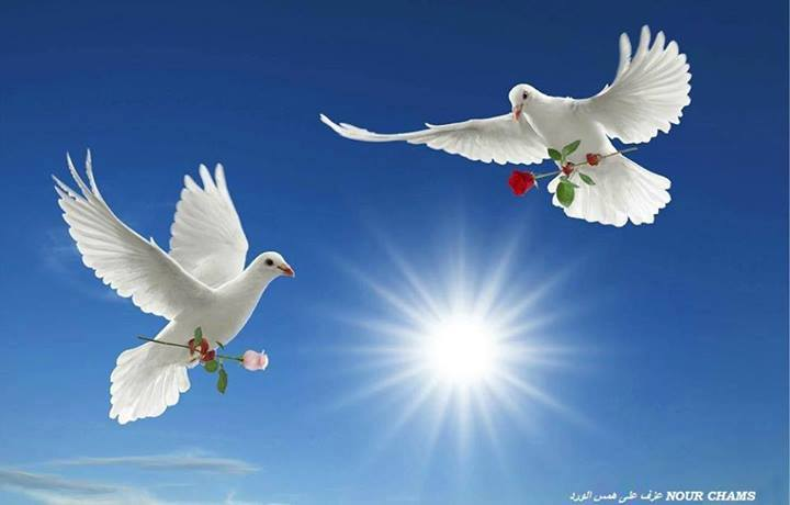 paix (2).jpg