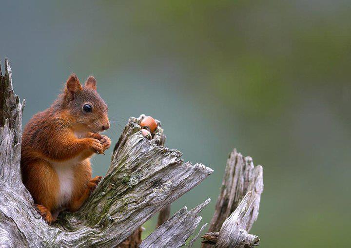 casse croute écureuil.jpg