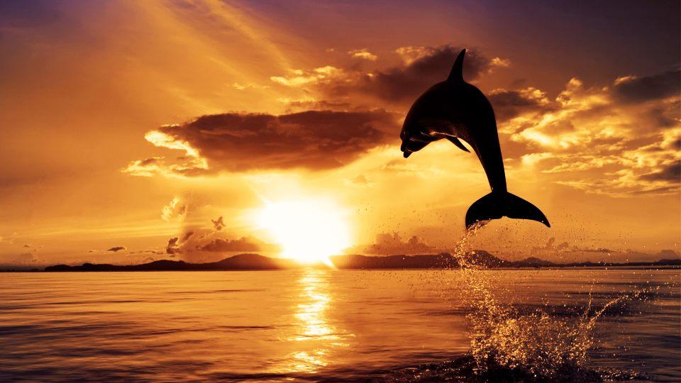 dauphin soleil.jpg