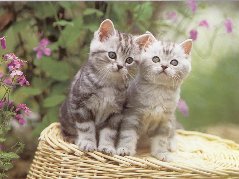 chatons mignon fleur jolie.jpg