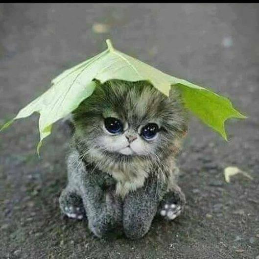 chat parapluie.jpg