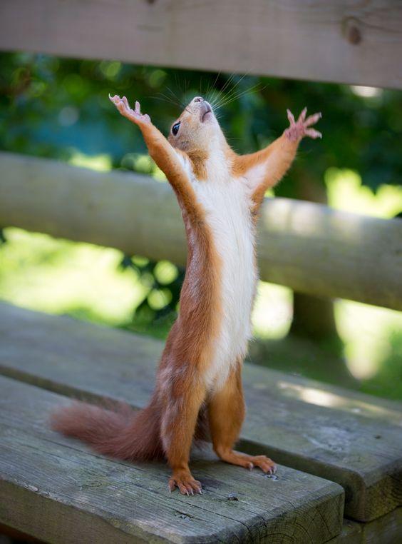 écureuil victoire.png