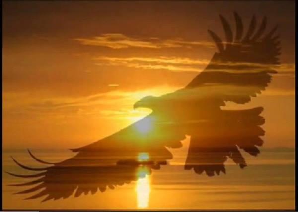 aigle soleil.jpg