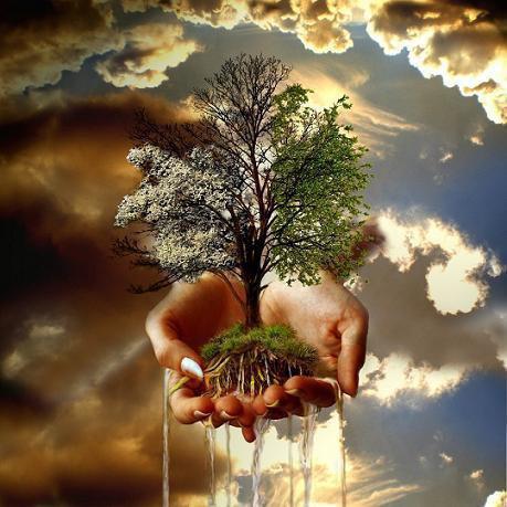 arbre mains.jpg