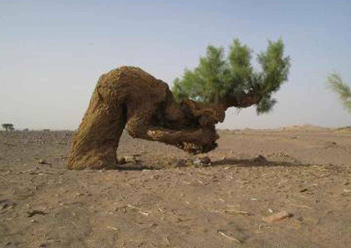 arbre tourmenté1.jpg