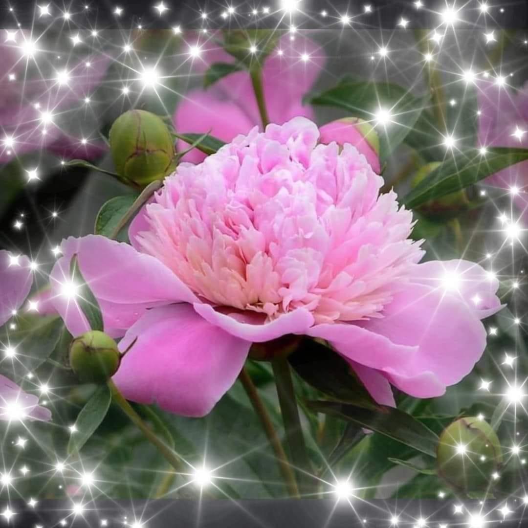 fleur étoilée.jpg