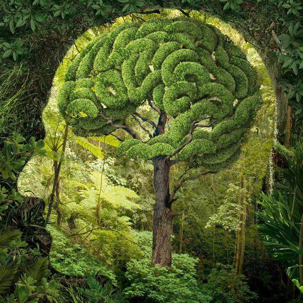cerveau nature.jpg