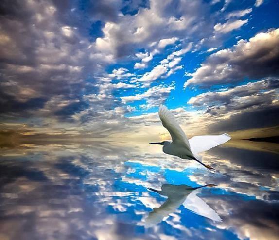 cigne ciel bleu.jpg