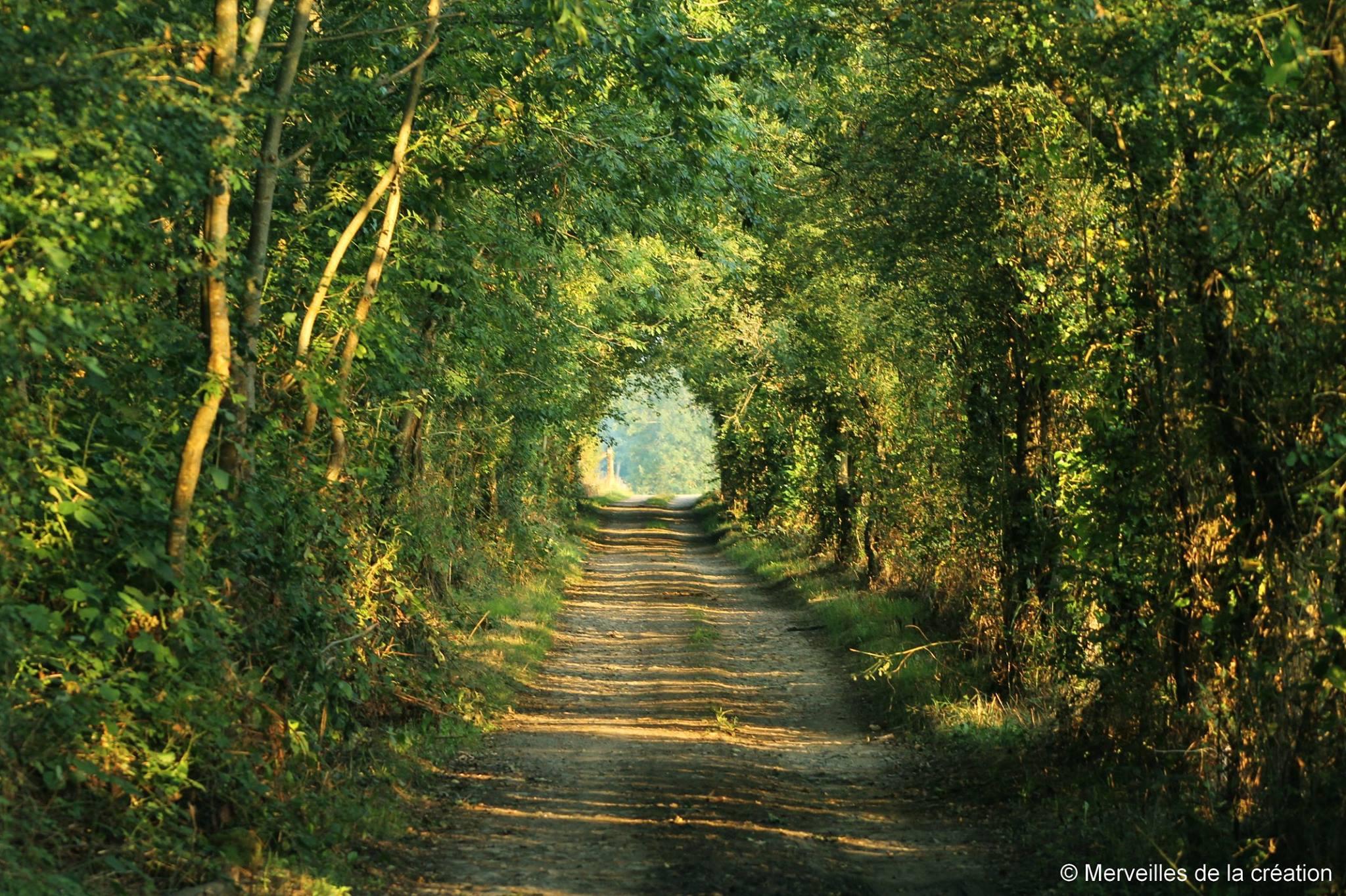 chemin vert.jpg