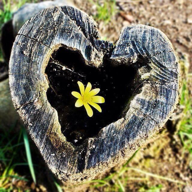 coeur et fleur.jpg