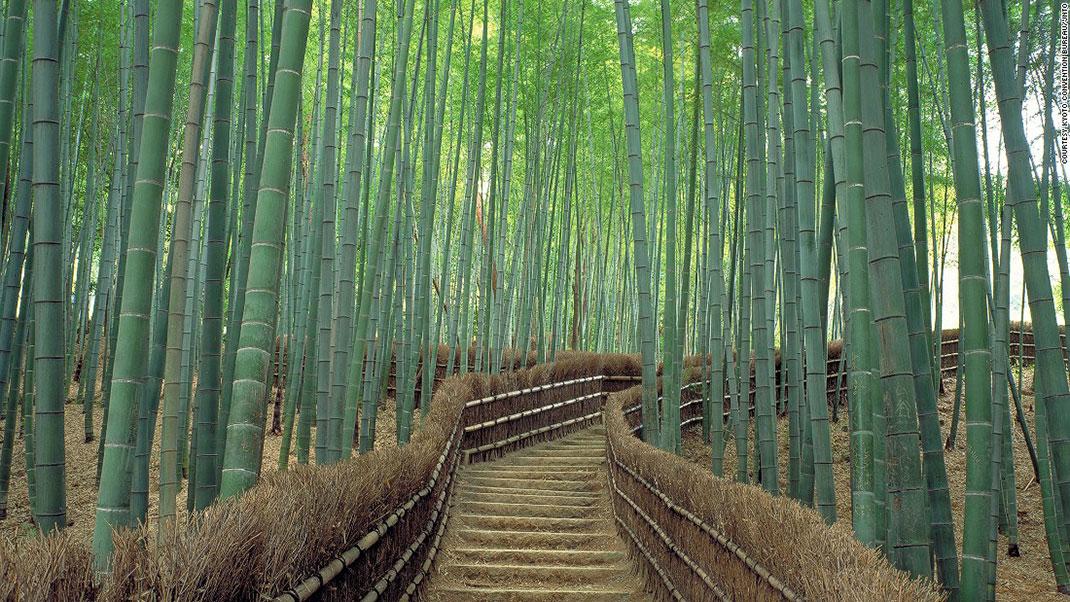 bambou japon.jpg