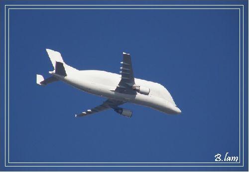 Le Beluga A300