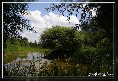 La Réserve Naturelle de l'Etang Saint-Ladre