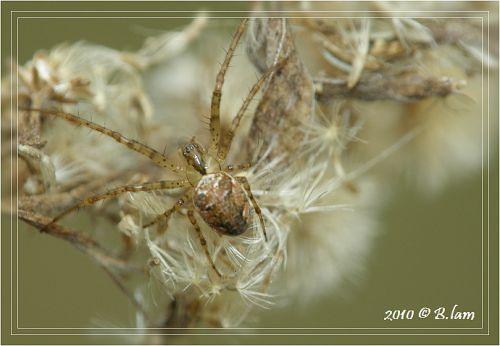La Première Araignée 2010
