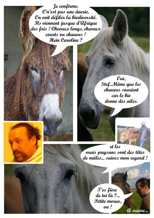 page--4-vache-de-salon-!.jpg