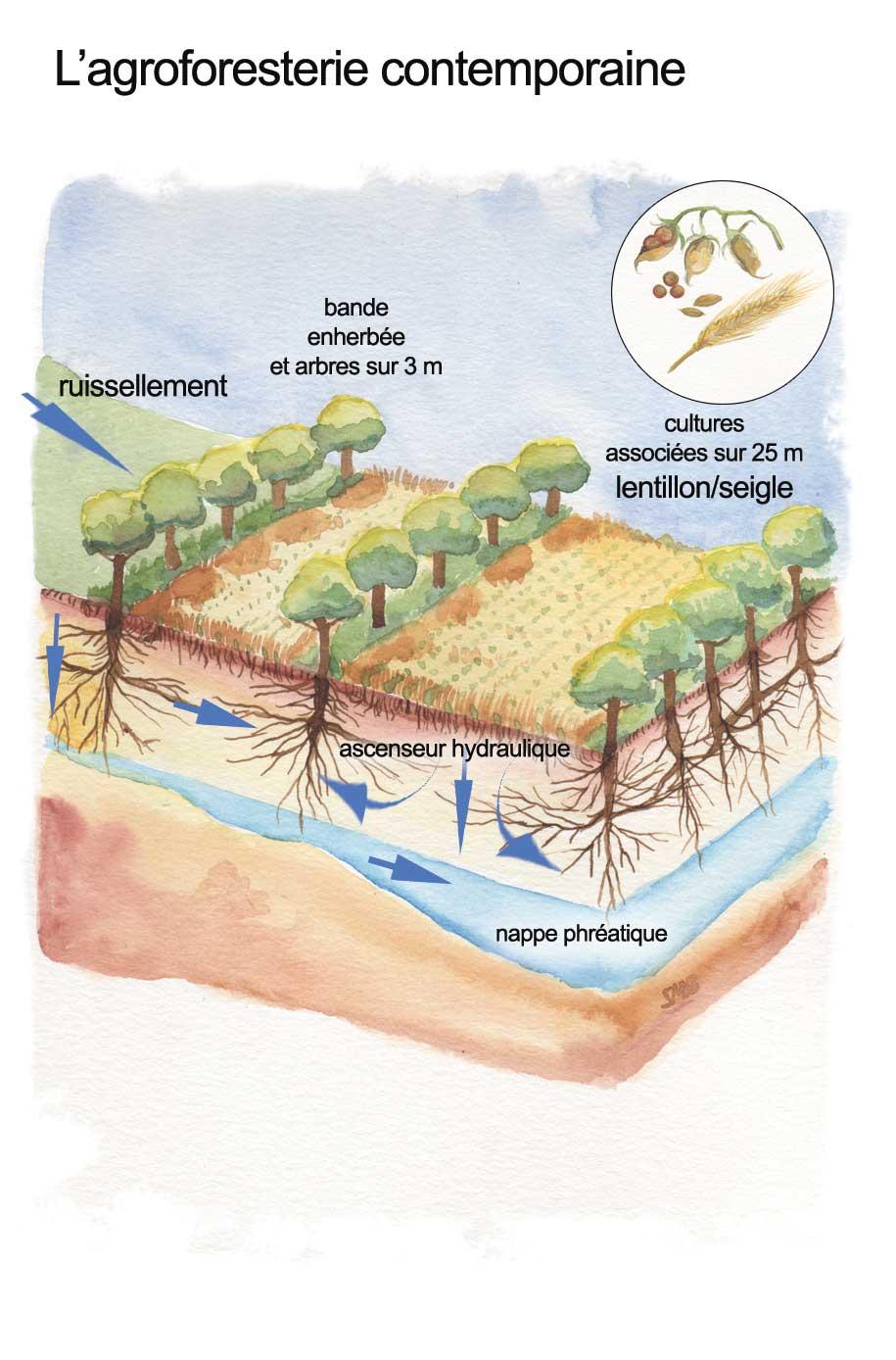 Annexe-4---agroforesterie-contemporaine.jpg