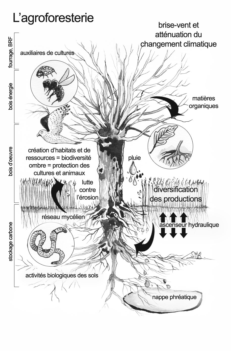 Annexe-10---L'arbre-agroforestier.jpg