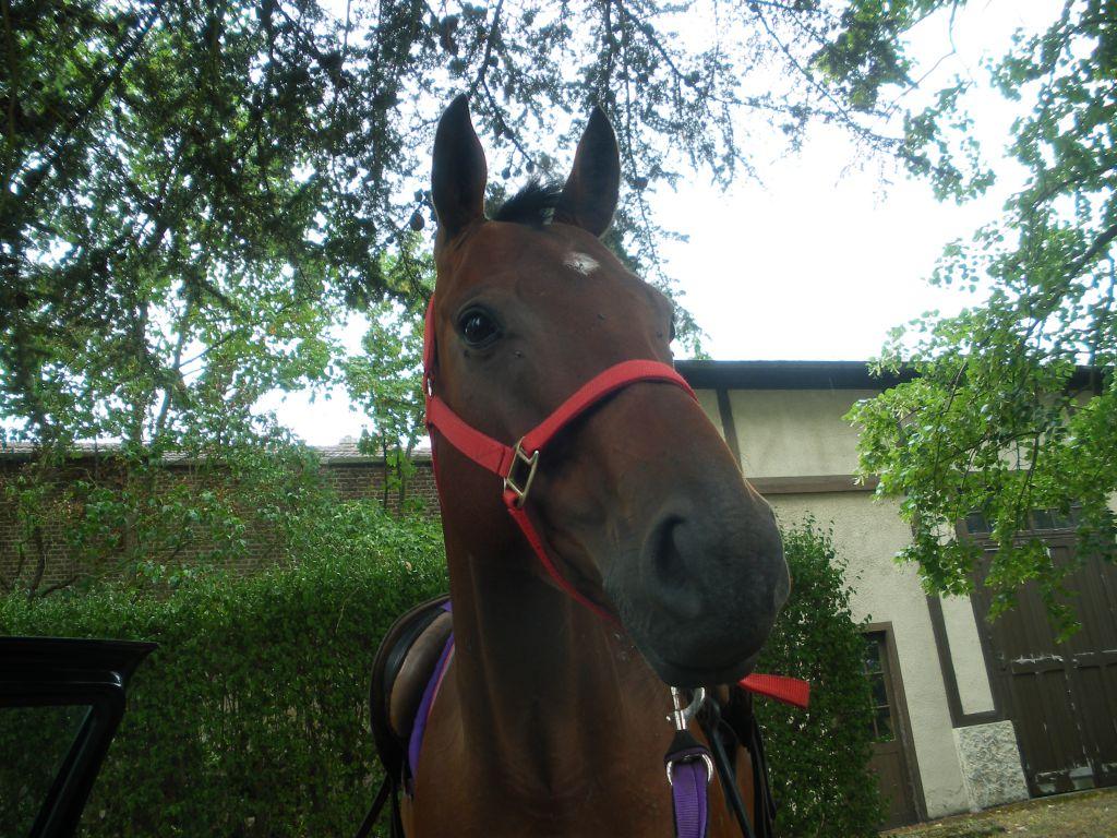 windy notre nouvelle amie kaki est parti rejoindre le paradis des chevaux il y a 2 ans. Black Bedroom Furniture Sets. Home Design Ideas