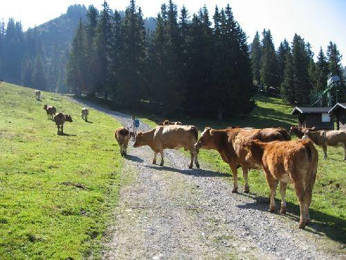 La vache!!!!!!!!!!!