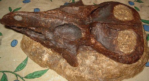 <font color=red> Protoceratops Gobi Mongolie