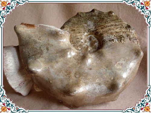 MAMMITES MAROC   16 CM