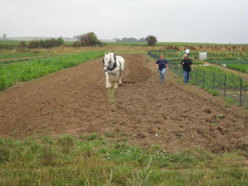 samedi 06 août 2011,démonstration travail du sol.LE HAMEL