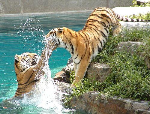 bataille aquatique