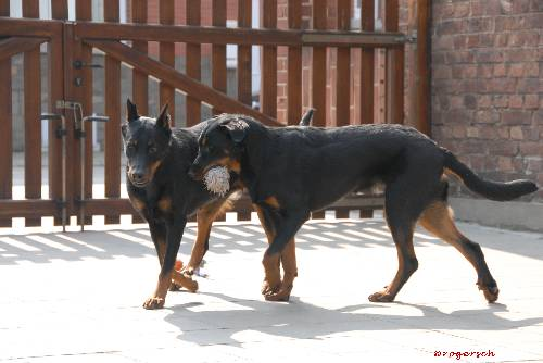 Geijs avec sa maman Arky