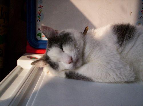 Que c\'est bon de dormir la tête au soleil