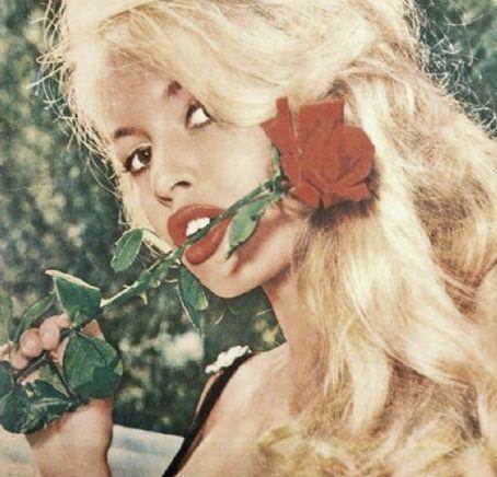 rose-brigitte-bardot-15990304-454-436.jpg